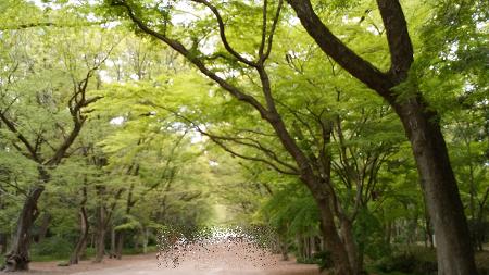 糺の森.jpeg